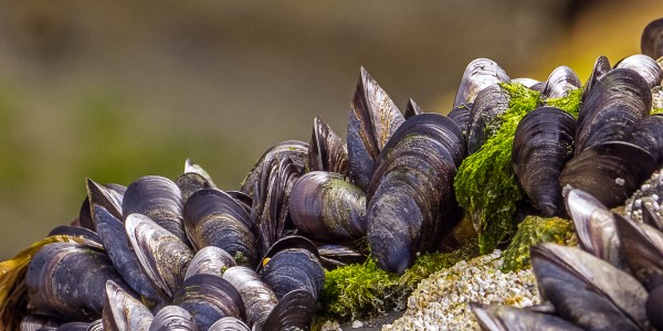Mussels High and Dry by Alan Barker