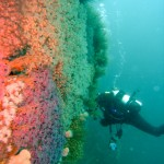 Diving at Bawden Rocks